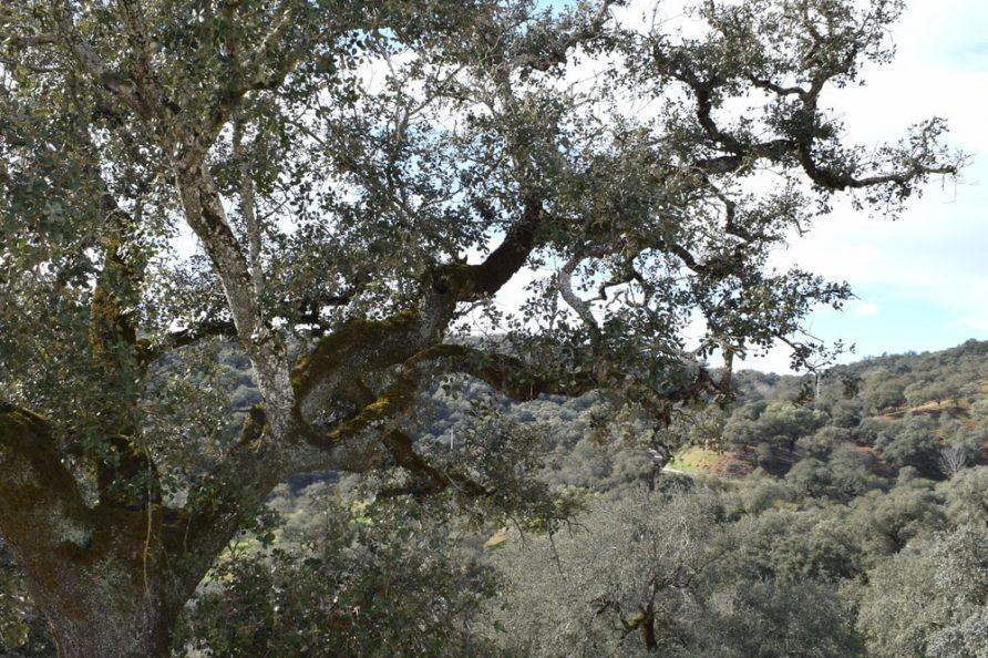 Outside Casa de Campo tree