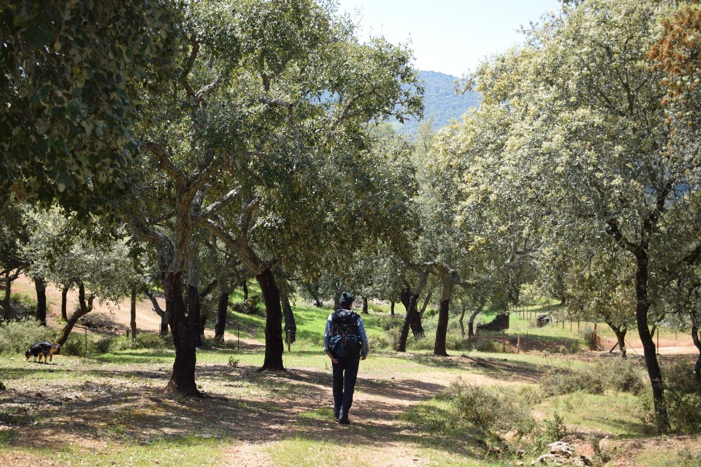 hiking man through the Sierra