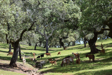 dehesa landscape views at Finca Bravo with cork and holm oaks carousel